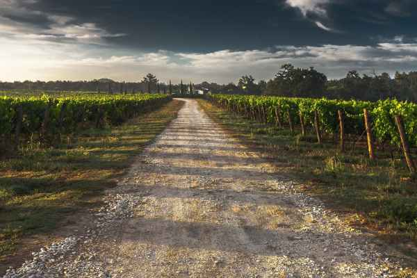 country-lane-gravel-road-tuscany-way-52725.jpeg